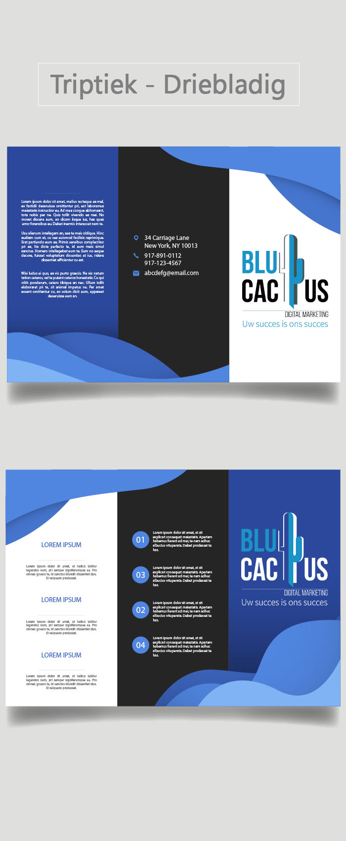 BluCactus - Brochure Ontwerp Bureau - Drieluik
