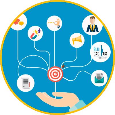 BluCactus - strategie in een bedrijf kunt implementeren