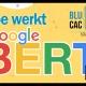 Blucactus - Google BERT