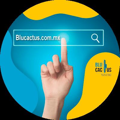 Blucactus-Types-of-domein-extensies.