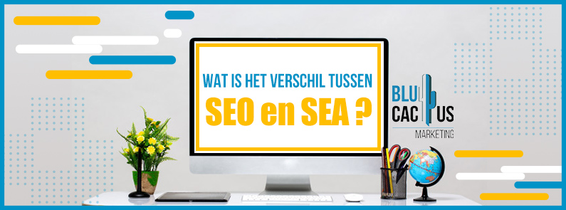 BluCactus - Tussen SEO en SEM - Titlr