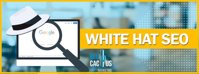 BluCactus - white hat seo - title