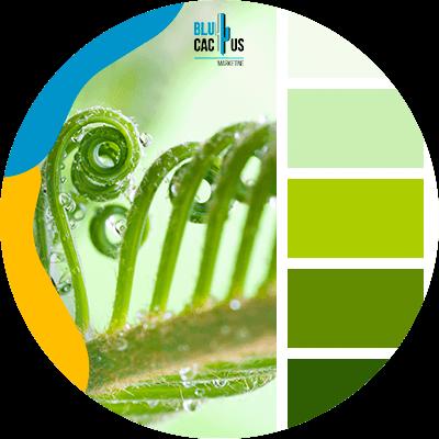 Blucactus-De-Kleur-Groen-en-zijn-verschillende-manieren-van-gebruik-en-toepassingen-in-de-industrie.p