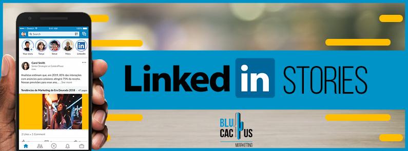 Blucactus-Linkedin-stories