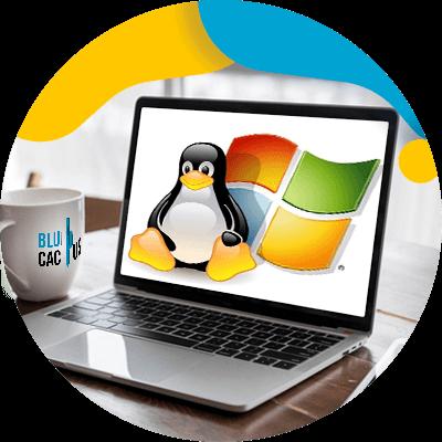 Blucactus-besturingssysteem-geschikt-voor-uw-server.