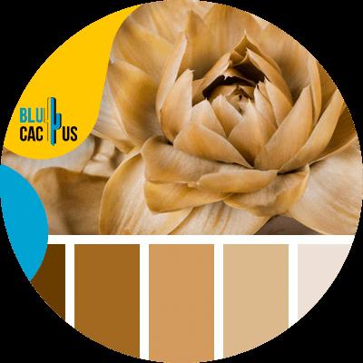 Blucactus-Hoe selecteert men de kleuren voor het logo van een modebedrijf?bruin